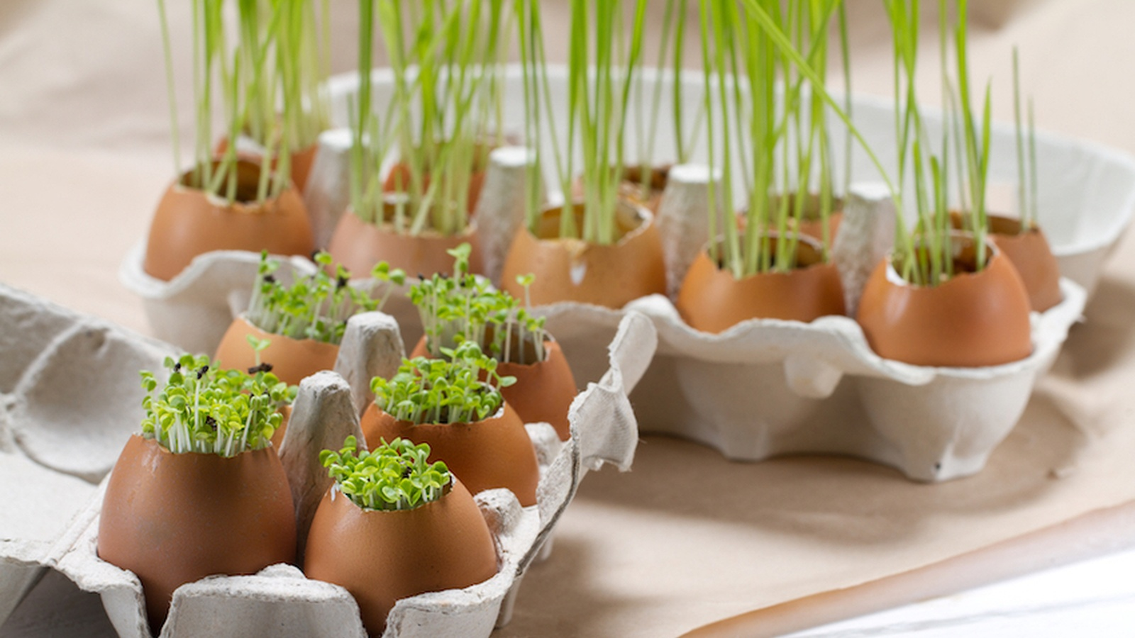 How To Grow Your Own Herbs On Your Kitchen Counter