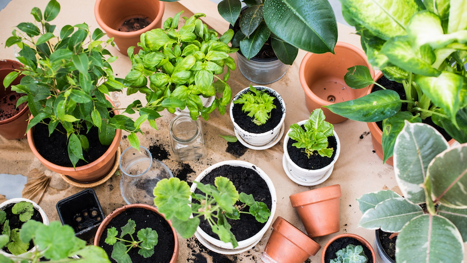 8 Easy Foods To Grow In Almost Any Home