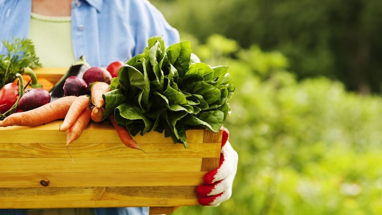 Rising Food Prices - Grow Your Own Organic Garden