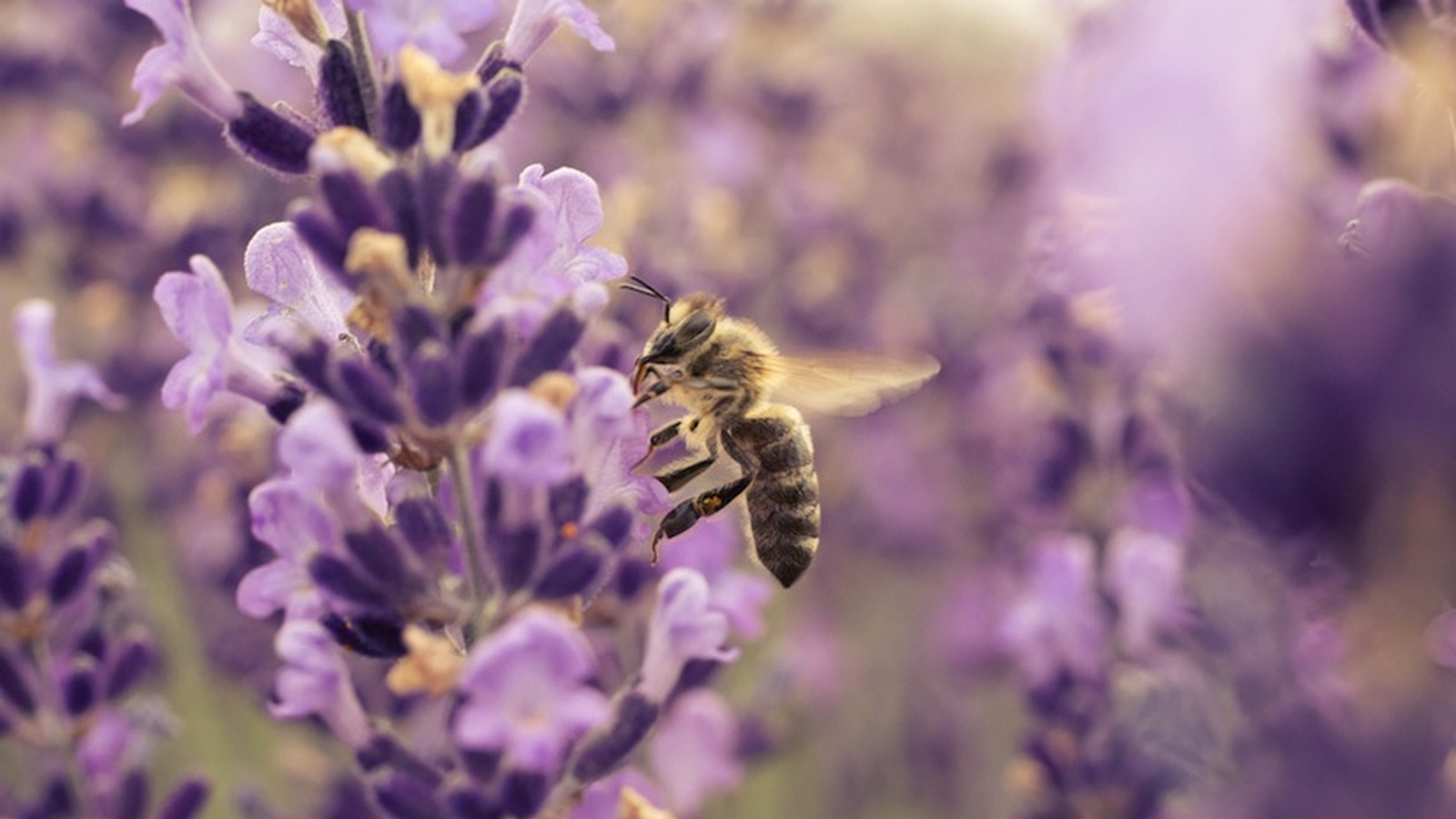 Birds, Bees and Butterflies - The Pollinators Keeping Us Healthy
