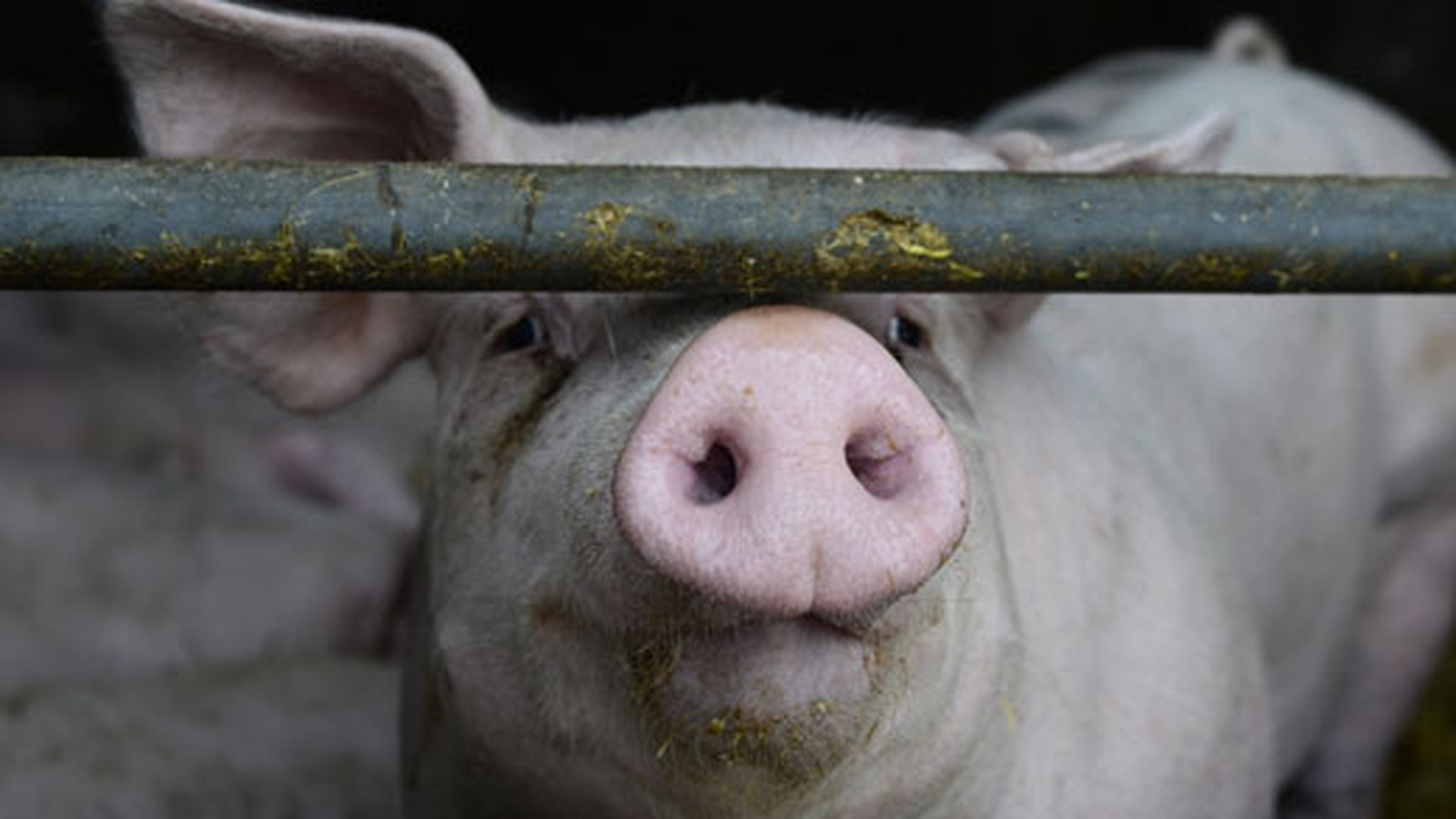What is Factory Farming?