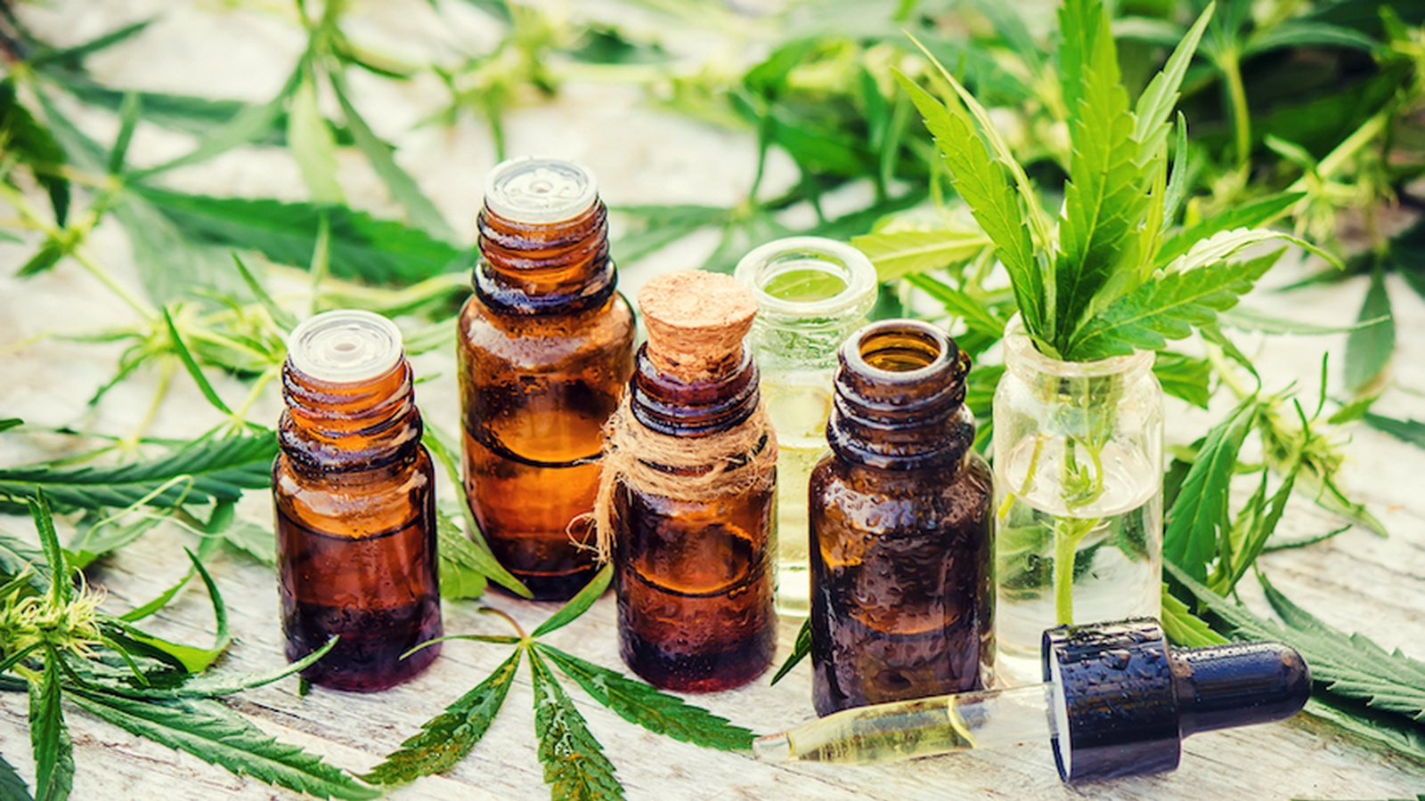 7 Health Benefits of Cannabis Oil