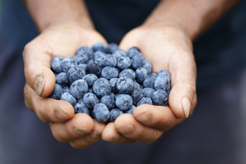 8 Reasons To Eat Blueberries and Why You Should Freeze Them!