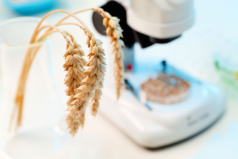 GMO Scientist Silenced By Biotech Industry
