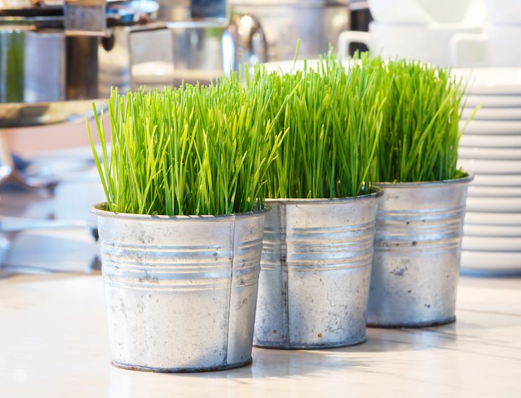 Top 10 Benefits of Wheatgrass