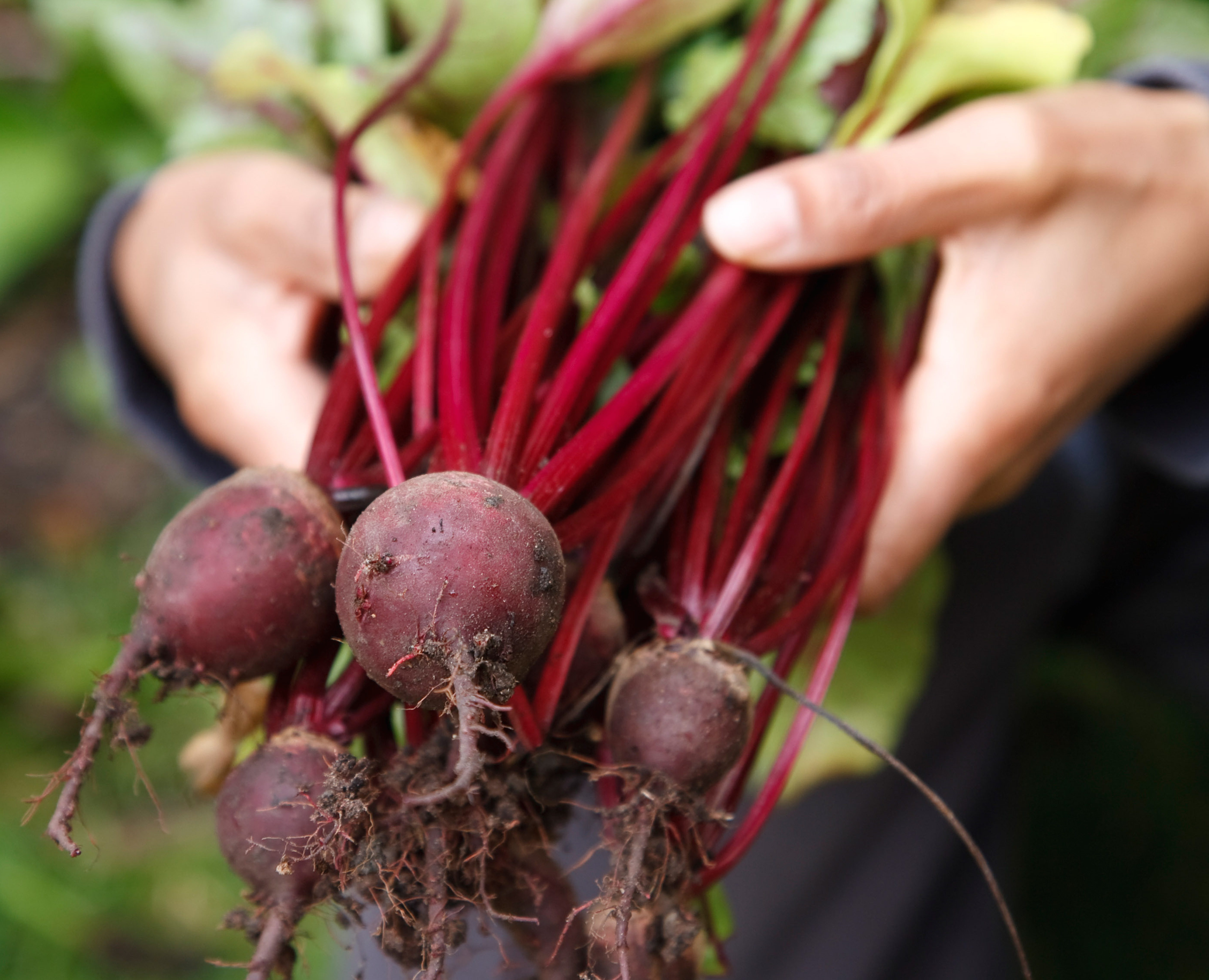 Can A Root A Day Keep Blood Pressure At Bay?