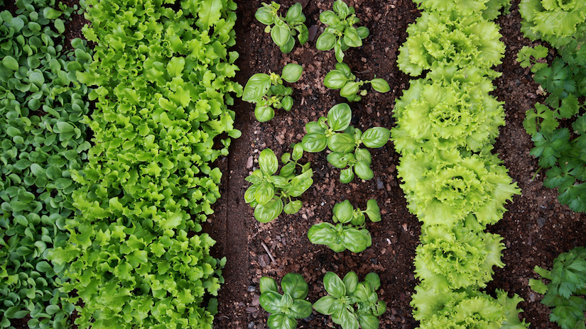 Top 10 Reasons To Grow Your Own Organic Food