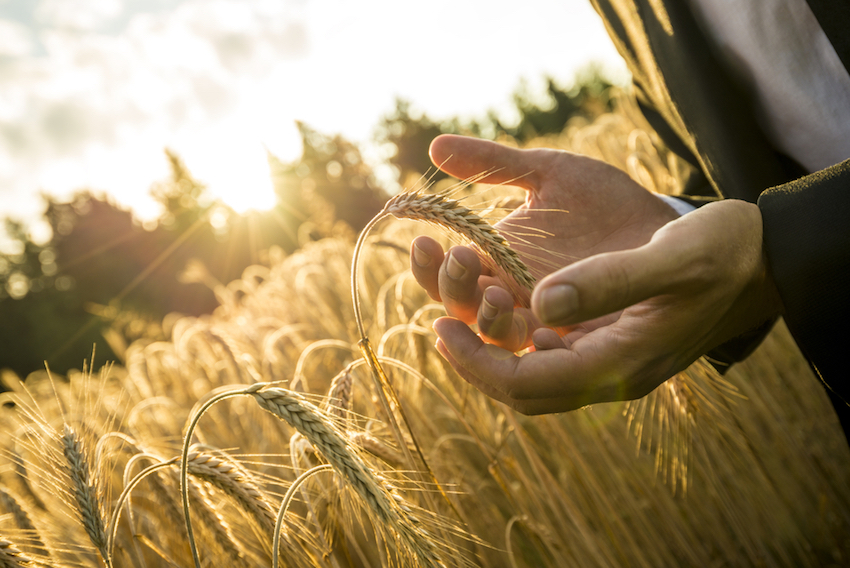 This Could Be The Article That Stops You Eating Non-Organic Wheat