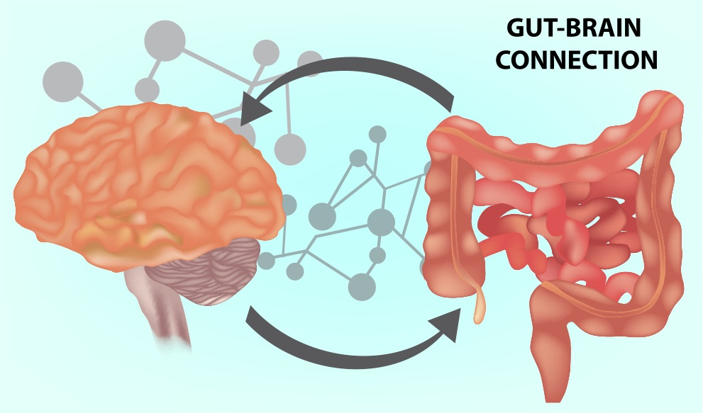 The Gut Brain Axis