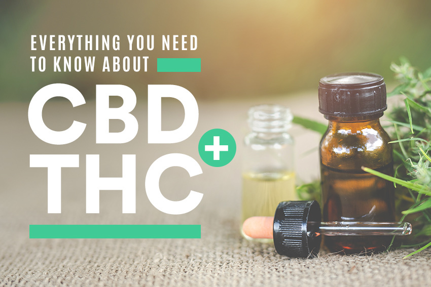 Learn Everything You Need to Know About CBD + THC