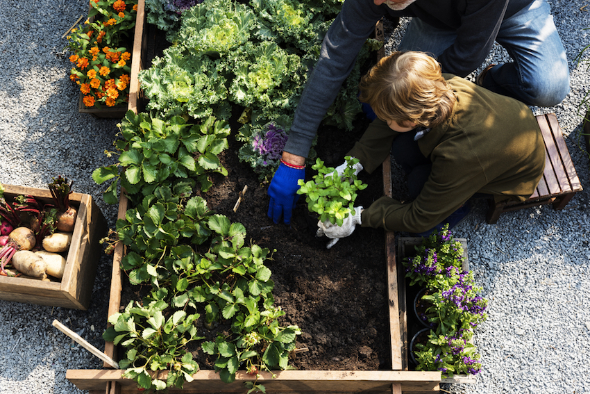 Your Guide To Organic Gardening
