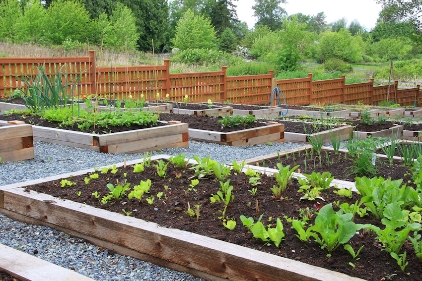 Is Organic Gardening The New Way To Save The Planet?