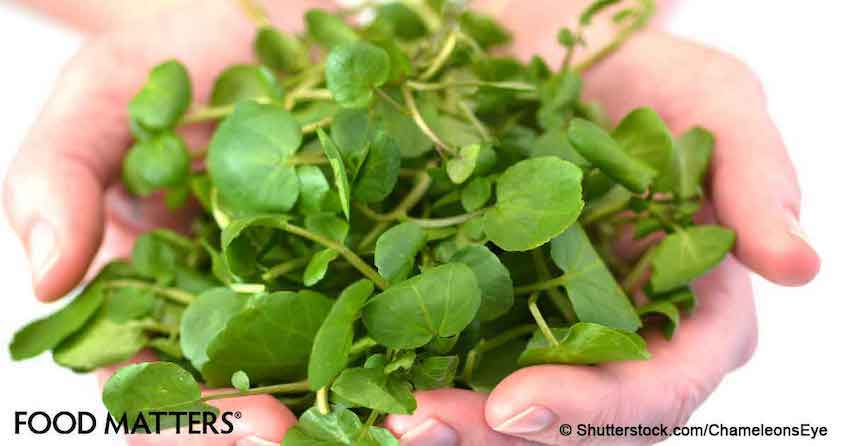 Watercress: The Mind-Blowing Effects on Ovarian, Breast and Prostate Cancer Nobody Told You